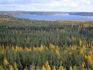 bosques-en-finlandia-4643